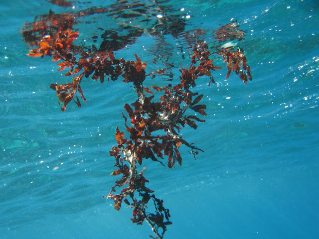 http://www.seagriculture.eu/