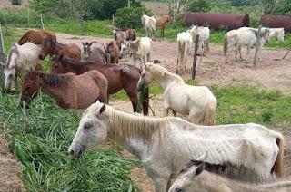 http://vnoticia.com.br/noticia/4258-departamento-de-correicao-planeja-leilao-dos-animais-apreendidos-nas-vias-publicas-em-sfi