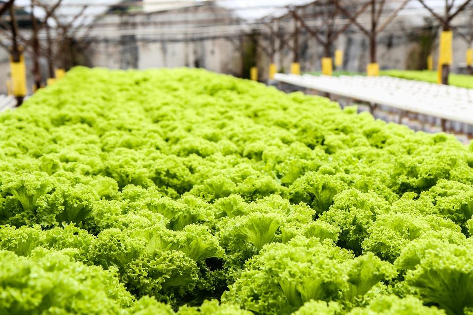 Daftar Tabel Nutrisi A/B Tanaman Sayuran dan Buah Hidroponik yang Sering di Konsumsi