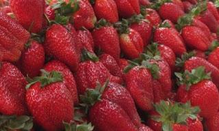 les fraises de Mireille, malooka