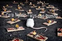 Cara Mengusir Tikus dengan Alami