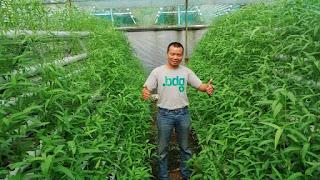 Pak Charlie menganggap bisnis yang ia geluti sekarang sangat menjanjikan. Dia pun kerap diundang untuk berbagai penyuluhan di berbagai tempat seputaran Jawa Barat untuk sekedar sharing dan bertukar pengalaman.