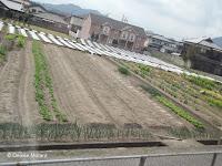 Large community plot, Kotohira, Shikoku, Japan