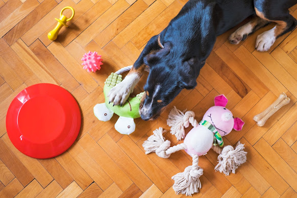 Dog with toys around on the floor
