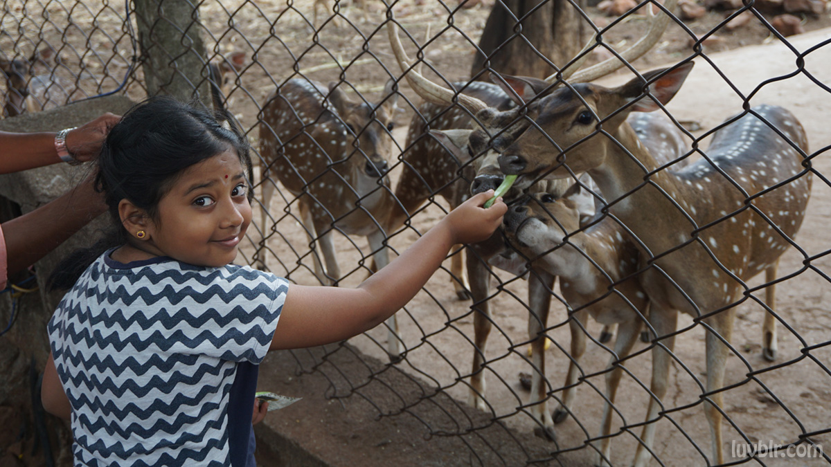Lakshitha Feeding Deer