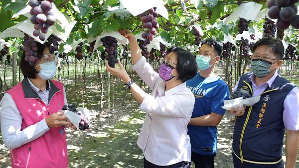 彰化葡萄夏果盛產期 王惠美關懷農業產業籲多選購嘗鮮