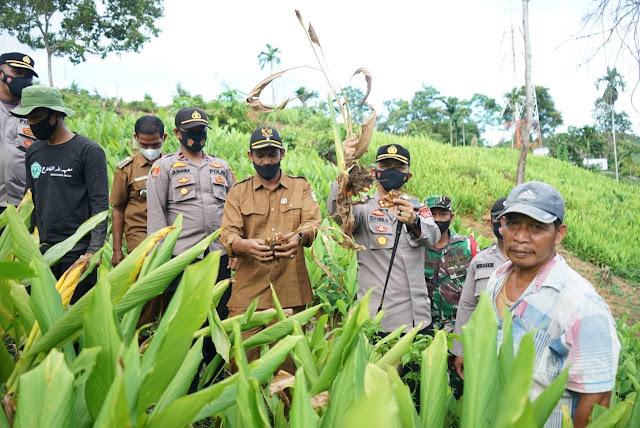 Ketahanan Pangan Tanaman Kunyit, Kapolres Pidie Kunjungi Kampung Tangguh Aceh