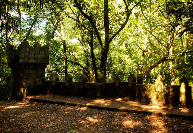 Galicia CAngas Bosque encantado