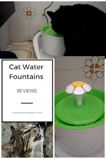 cats fountains