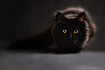 خلفيات جوال قطة سوداء , قطط مخيفة . قطة مخيفة