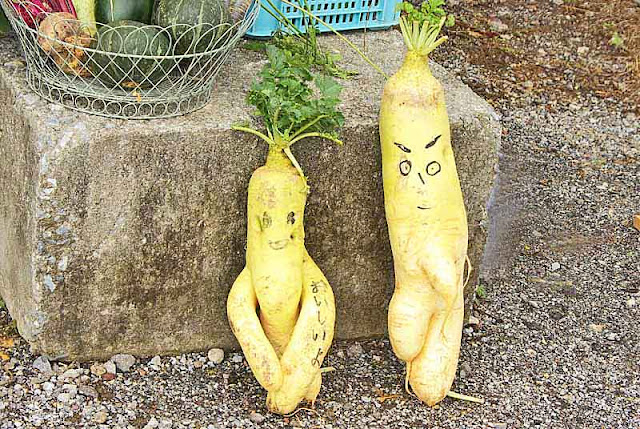 daikon, giant Japanese radishes, male, female, nudies