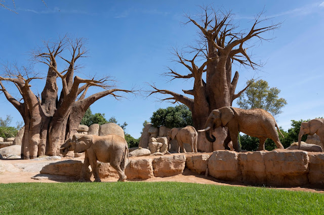 Primavera 2020 en BIOPARC Valencia - Día del Medioambiente - elefantes