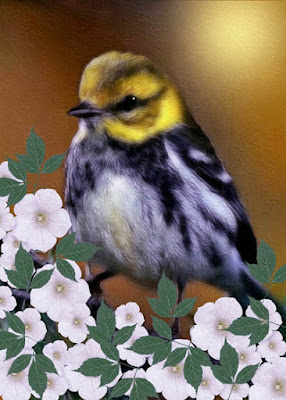 Image of Black-throated Green Warbler by Madeline Allen