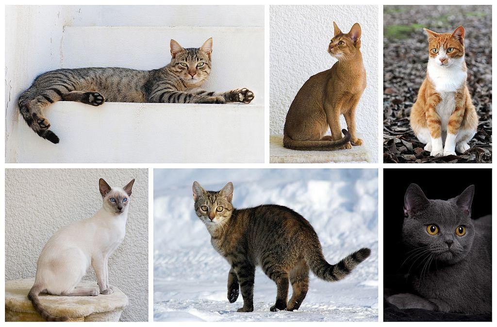 ά ά Cats