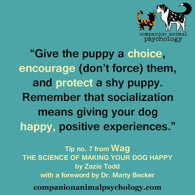 Give the puppy a choice: A tip from the book, Wag