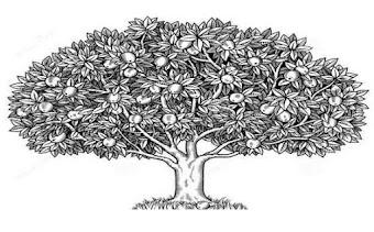 Contoh Psikotes Gambar Pohon Berkambium yang Benar