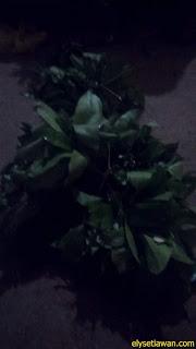 daun melinjo ( daun so) 1 sanggga