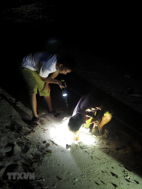 Thợ săn đào những cái hang trên cát để bắt cua đá, còng biển.