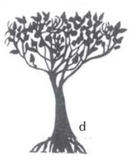 Mengenal Mangrove : Aegialitis annulata R.Br.