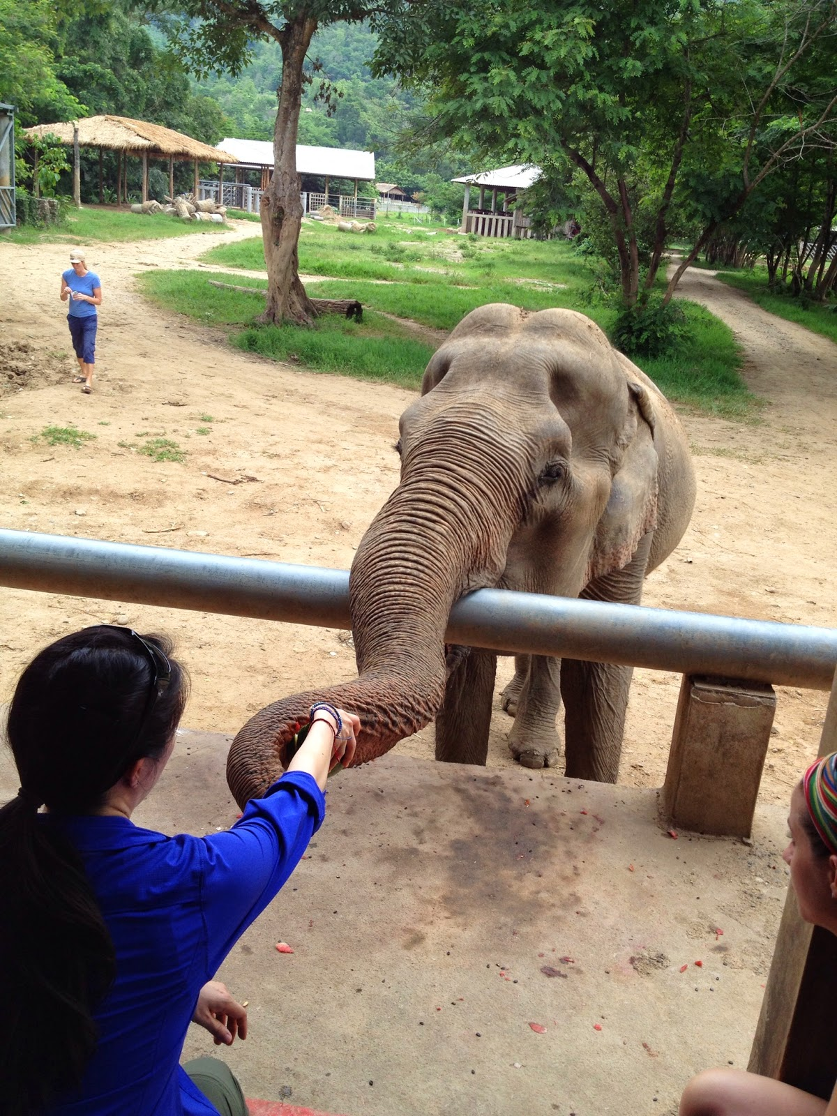 Chiang Mai - We had to maintain a healthy distance when feeding the elephants