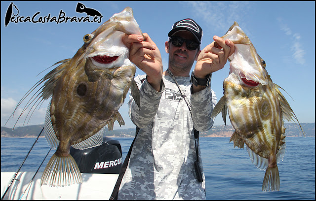 doblete gallos graphiteleader protone daiwa pirates pesca costa brava jjpescasport - JORANDAS DE JIGGING Y SPINNING