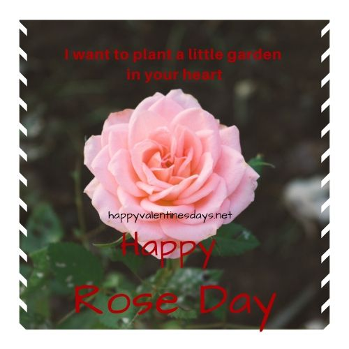 happy-rose-day-photo