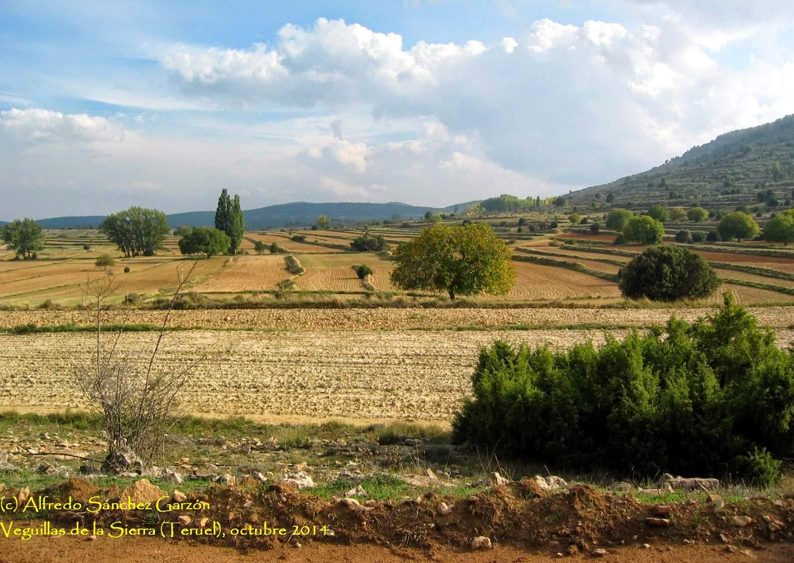 campo-royo-arroyo-cerezo-castielfabib