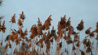 Foin l'hiver, ciel gris