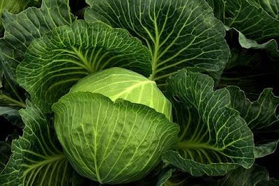 Cabbage for High Blood Pressure / Hypertension