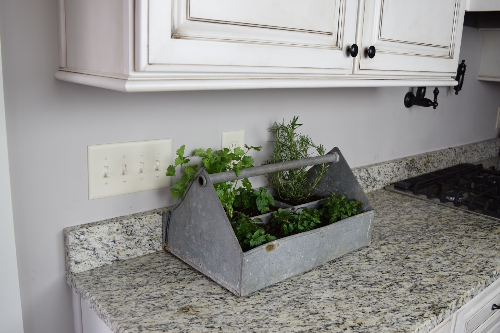Farm to Fte Easy Countertop Herb Garden