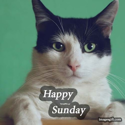 happy sunday images cats
