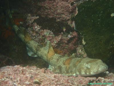 Underwater photography 水攝 Wide Angle 廣角 Scuba dive 潛水