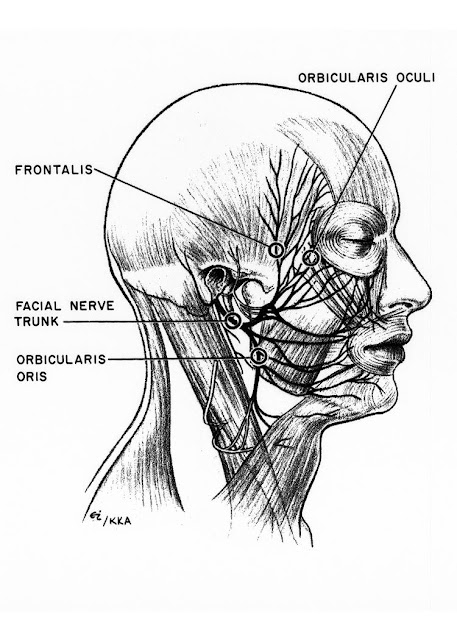 Facial nerve.ppt ~ YOUNG DOCTORS' RESEARCH FORUM