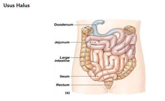 Memahami Sistem Pencernaan Manusia dan Fungsinya Secara Detail