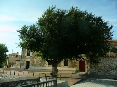 enorme árbol en el centro de Fuentelisendo