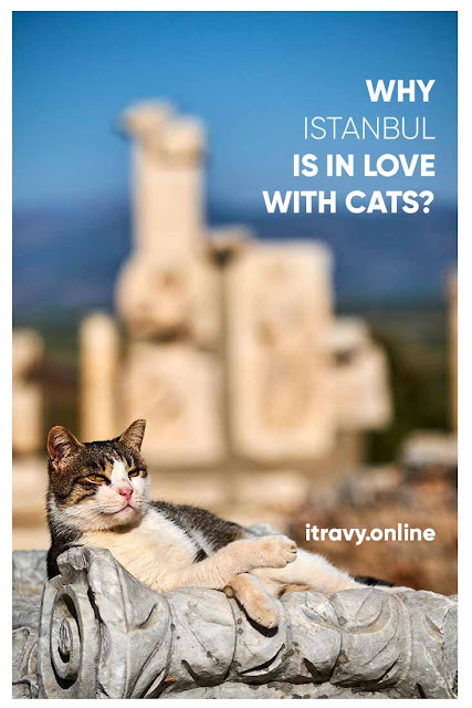 Why Istanbul is in Loved with CATS?
