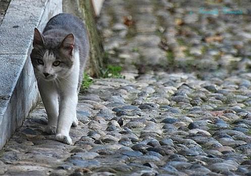 Gatto in salita