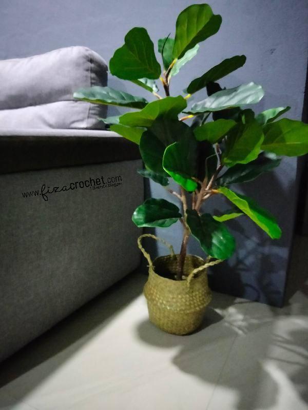 Pasu Untuk Pokok Fiddle Fig Tiruan