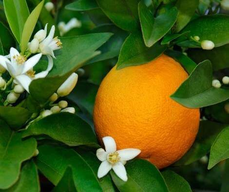 18 Best Orange Blossom Perfume