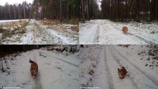 pies na spacerze Mazury