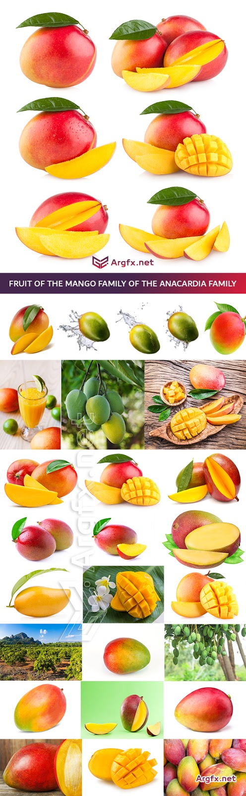 Fruit of the Mango family of the Anacardia family 25 HQ Jpg
