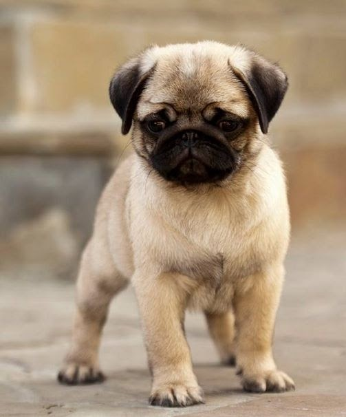 See more Cute dogs http://cutepuppyanddog.blogspot.com/