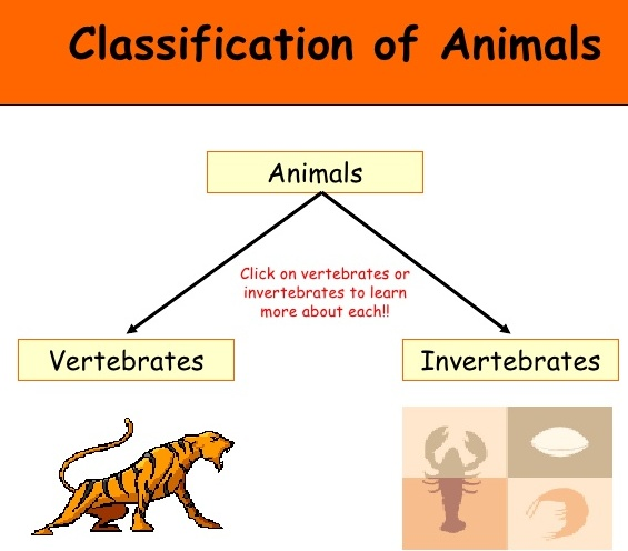 Animal Kingdom Classification Chart For Kids