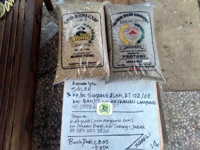 Benih Padi Pesanan    SOLEH Waykanan, Lampung.    (Sebelum di Packing).