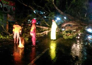 Pohon Tumbang Tutup Jalur Baturetno - Giriwoyo