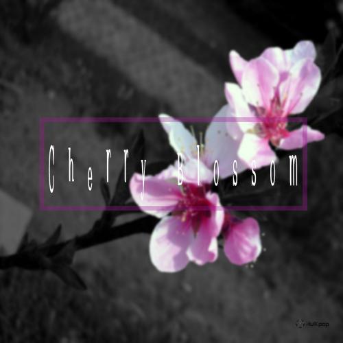 [Single] Kisper – Cherry Blossom