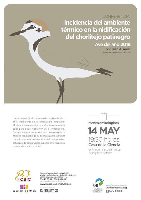 Conferencia: Incidencia del ambiente térmico en la nidificación del chorlitejo patinegro. Ave del año 2019. Por Juan A. Amat, 14 de Mayo 2019. Grupo Local SEO-Sevilla.