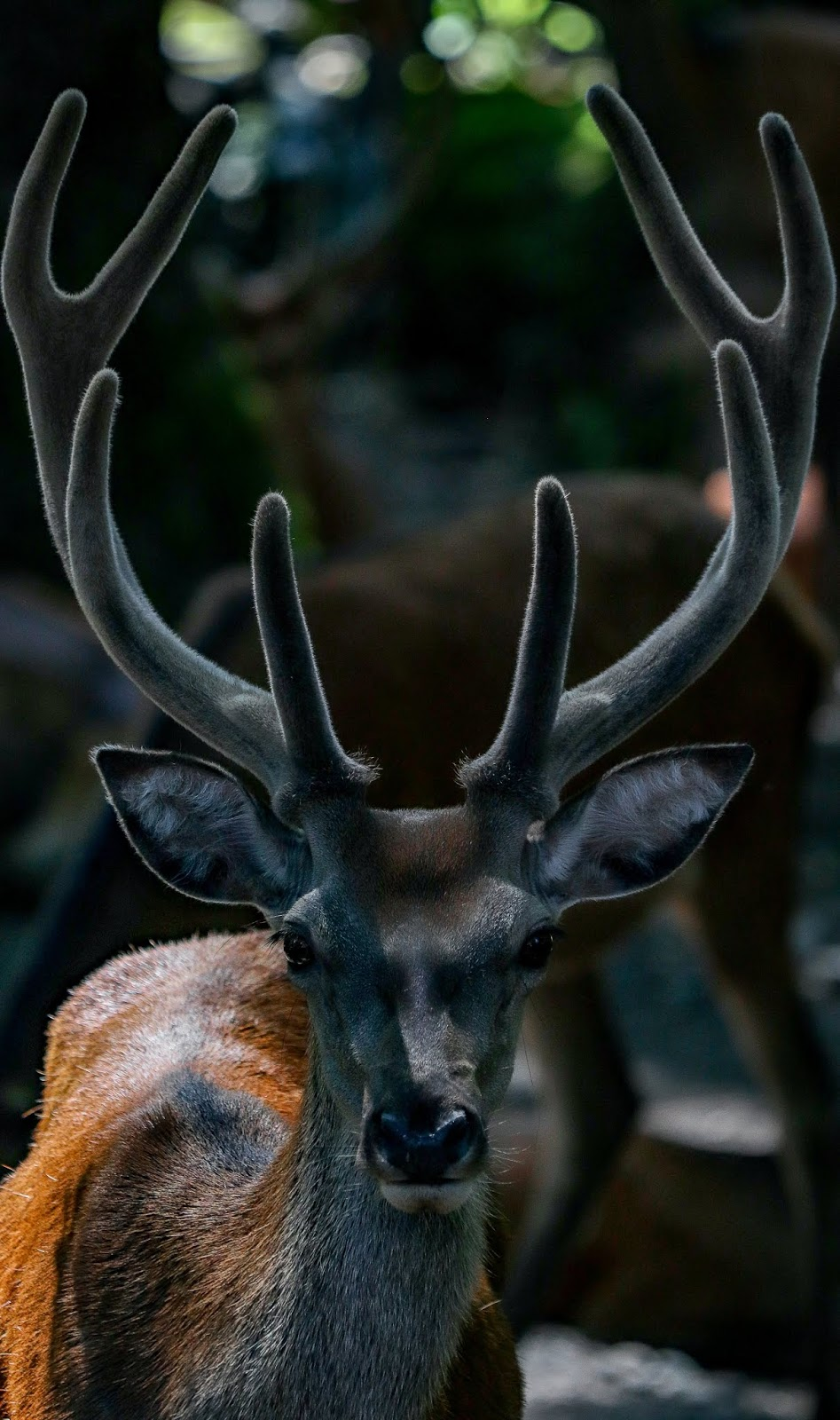 A deer with it's amazing antlers.