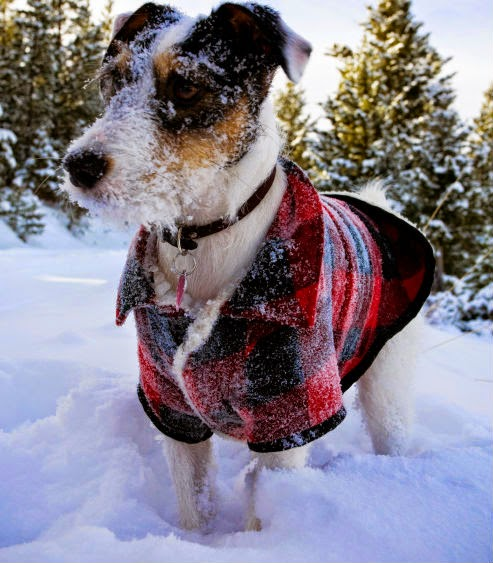 Protect Your Dog During Winter And Cold Weather