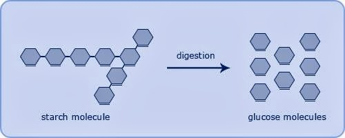 iGCSE Biology Revision Blog: 3.2 describe the structure of ...
